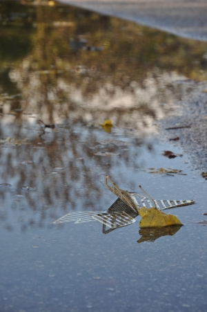 falling_leaves_05